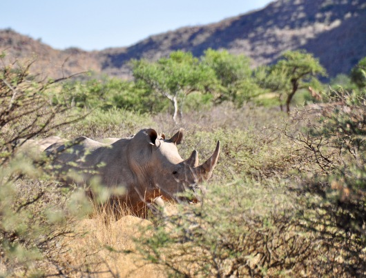 One of the two rhino's we saw from a distance.