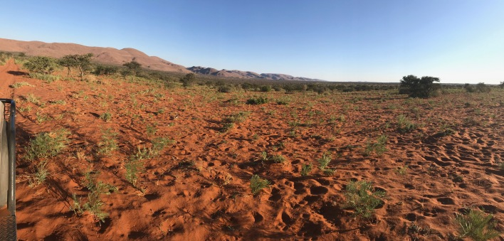 View from a sand dune. The whole scene is within the Tswalu Game Reserve.